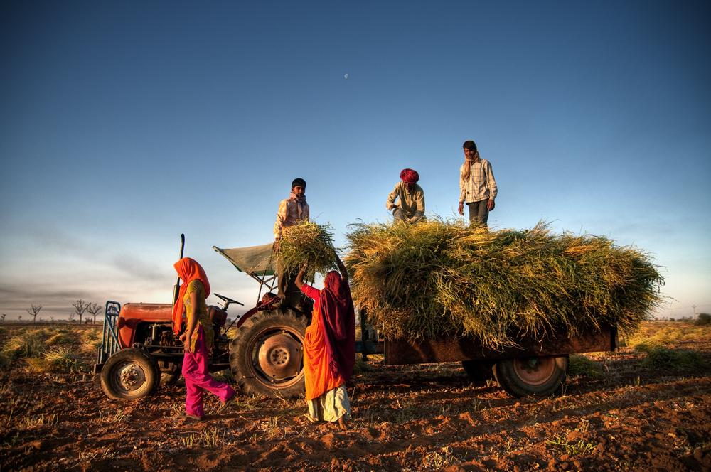 インド農業の政府の新たな取り組み