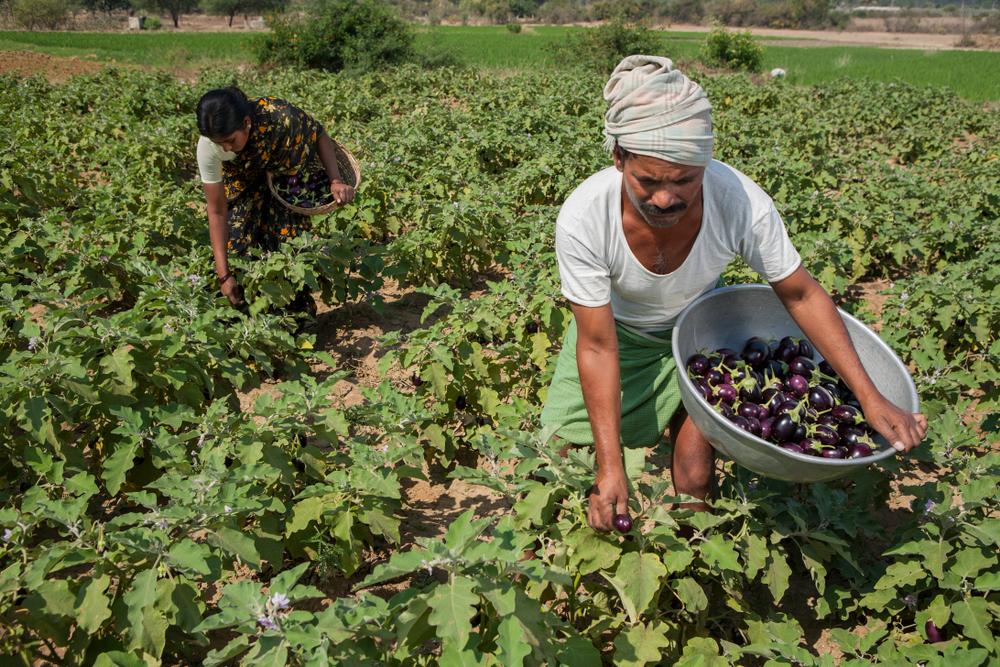 インドの有機農業